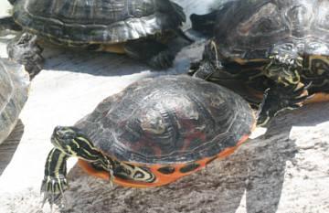Preguntas y Respuestas de las Tortugas